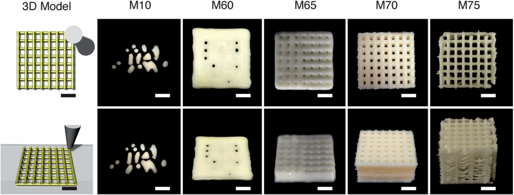 Optical images of the DIW 3D-printed models of milk. The effects of the concentration of milk on the spreading of the printed ink were evident from the printed models. The mesh structures printed with inks of M10, M60, and M65 spread and filled the gaps. The printed mesh structures were maintained after printing with M70 and M75 (all scale bar: 5 mm).