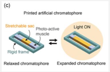 artificial chromatophore